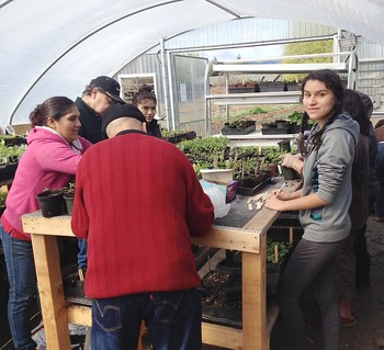 One of the SDOP-funded projects includes this garden in Hood River, Ore. Raices Cooperative members plant seeds and transplant veggie starts into larger pots. A fund-raising plant sale a few weeks later earned the project more than $2,000.
